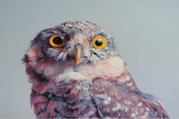 Совы в живописи Джона Пусатери (John Pusateri)