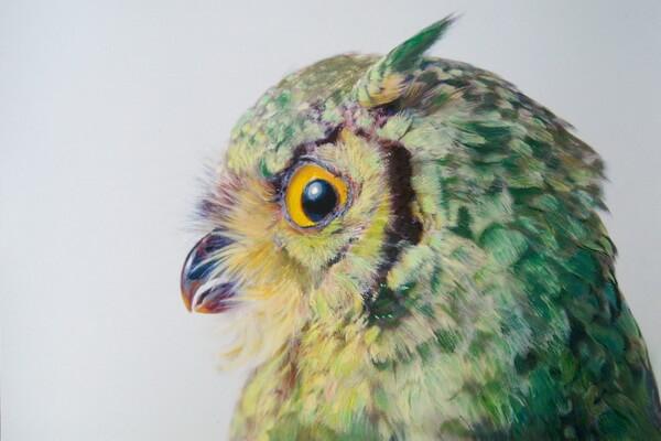 Красочные совы на картинах Джона Пусатери