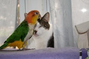 Что опасно для попугая