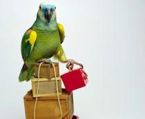 перевозка птиц