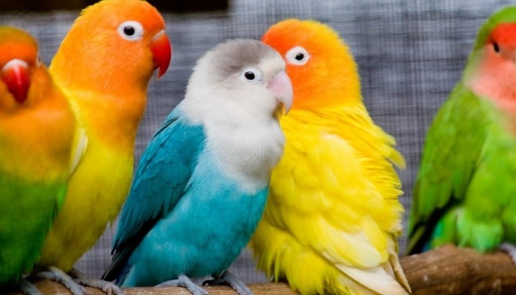 Болезни почек у попугаев