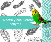 Болезни печени у попугая