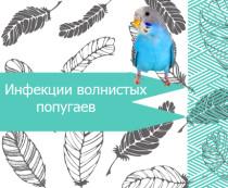 Инфекции волнистых попугаев