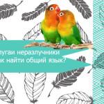 Попугаи неразлучники: как найти общий язык?