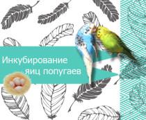 инкубатор для попугаев