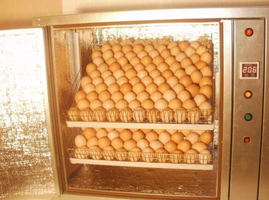инкубатор для домашней птицы