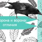 Ворон и ворона: отличия