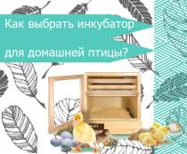 Как выбрать инкубатор для домашней птицы?