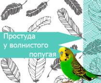Простуда у волнистого попугая