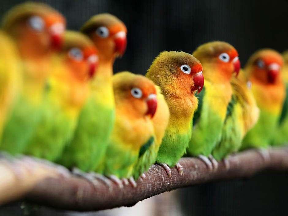Как продлить жизнь попугаю