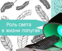 Роль света в жизни попугая