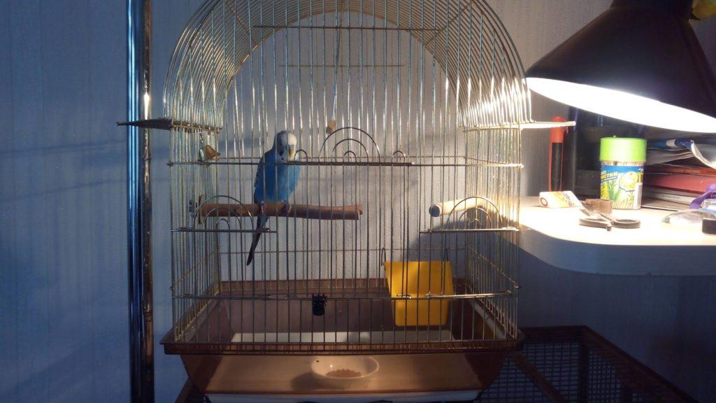свет для попугая