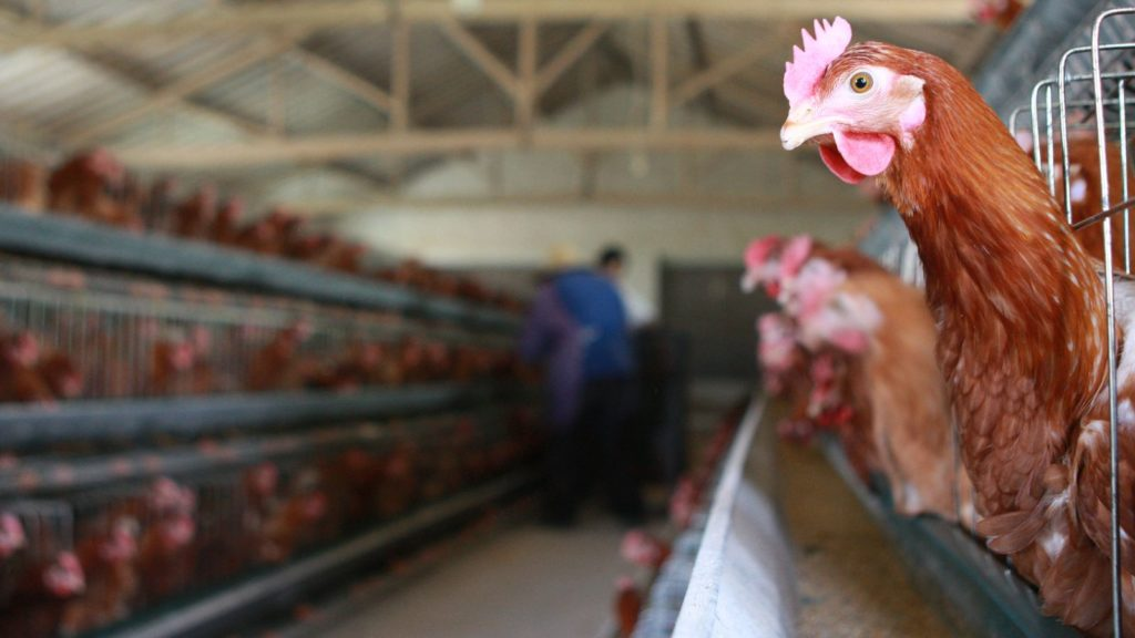Формы птичьего гриппа