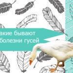 Какие бывают болезни гусей
