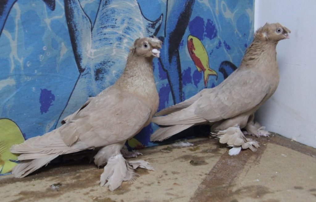 полет голубей