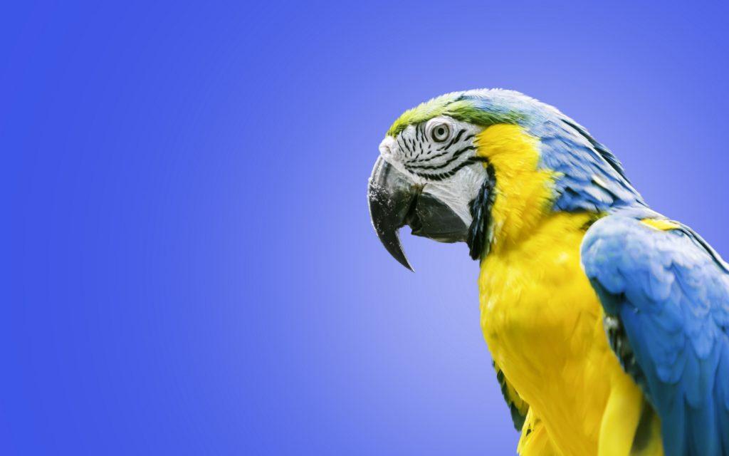 как назвать попугая девочку