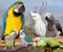 Как выбрать попугая для дома