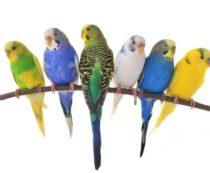 лучший корм для попугаев