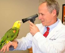 ветеринар для птиц