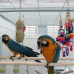Сколько живут попугаи в домашних условиях?
