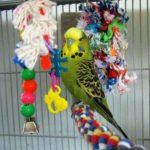 Какие игрушки выбрать для попугая?