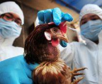 Общие болезни человека и птиц