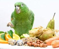 Что можно и нельзя давать попугаю