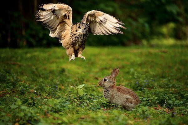 Общее описание птиц сов