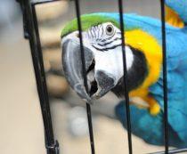 Как перевезти попугая в другую страну