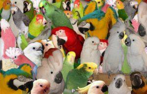 Топ-10 птиц для домашнего содержания.