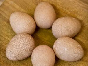 Польза цесариных яиц.