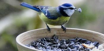 Чем кормить птиц зимой в кормушке- таблица корма и советы орнитолога
