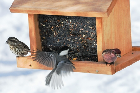 Кормушка из зерен: украшение сада и угощение для птиц