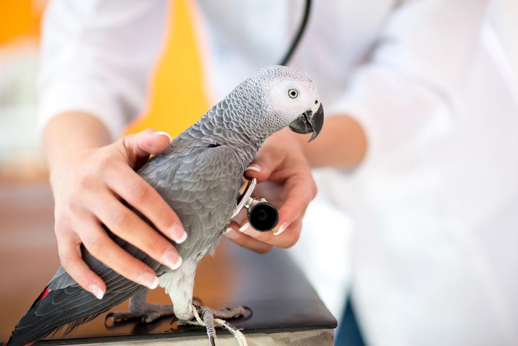 Анестезия птиц