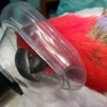 Анестезия птиц: как ее проводят
