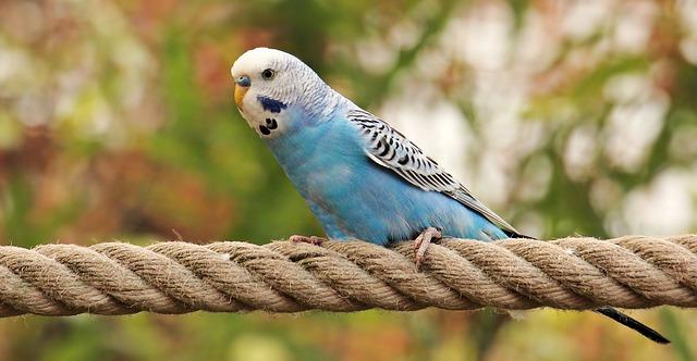 сколько стоит клетка для попугая волнистого