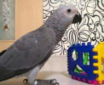 купить попугая жако