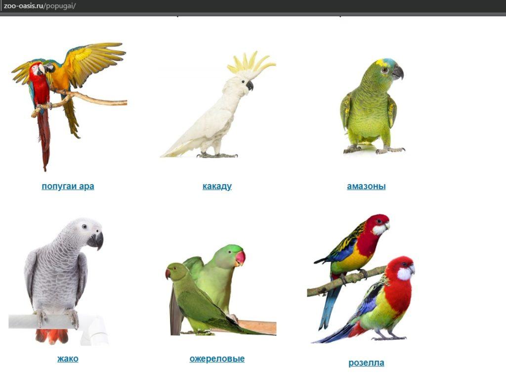 Каких попугаев продают в питомнике Зоо-Оазис
