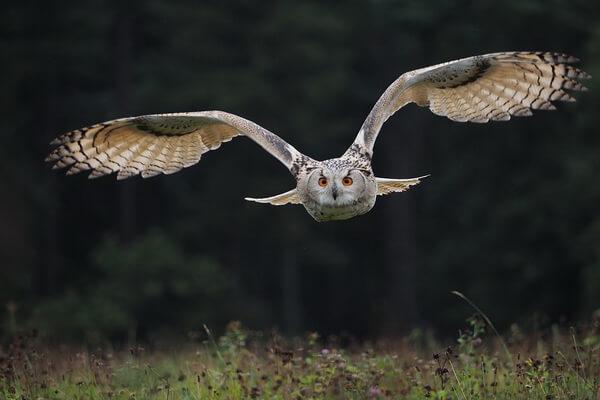 Сколько живут совы