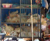 Где купить птиц в Краснодаре