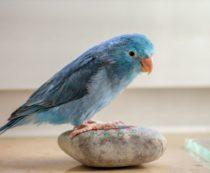 Разведение попугаев как бизнес
