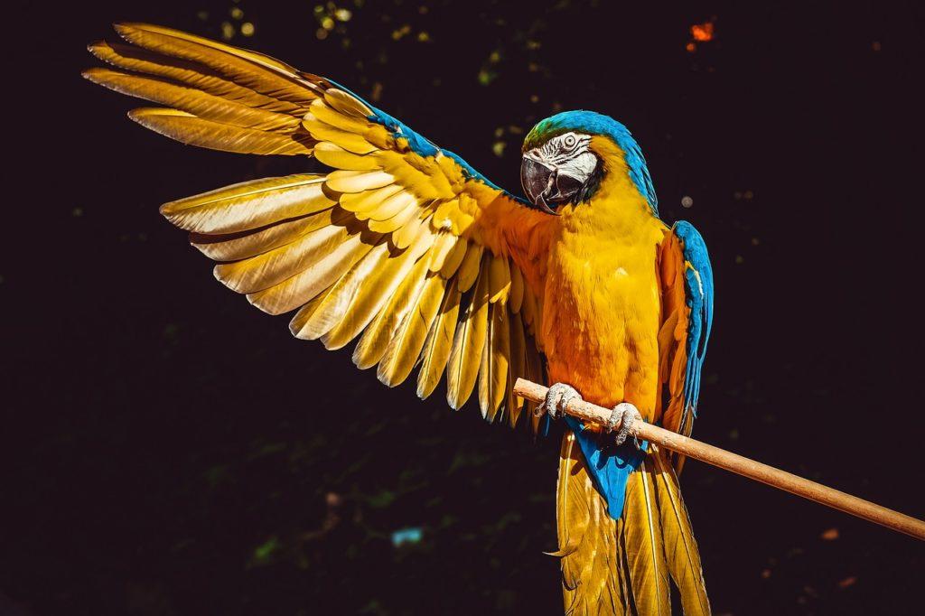 Цена на говорящих попугаев