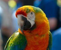 Сколько стоят экзотические попугаи