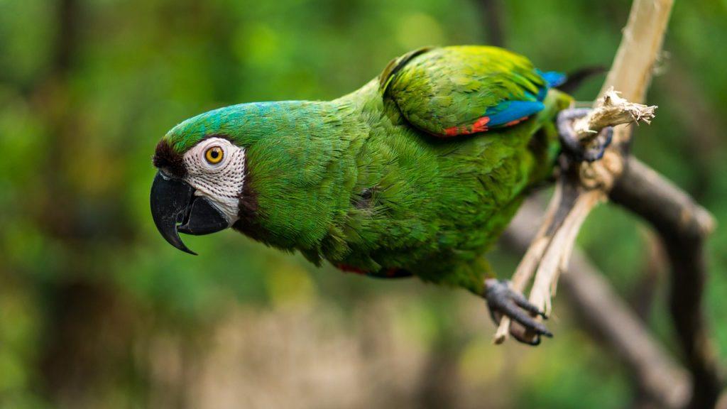Приобретение экзотической птицы
