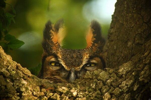 Все самые интересные факты о совах