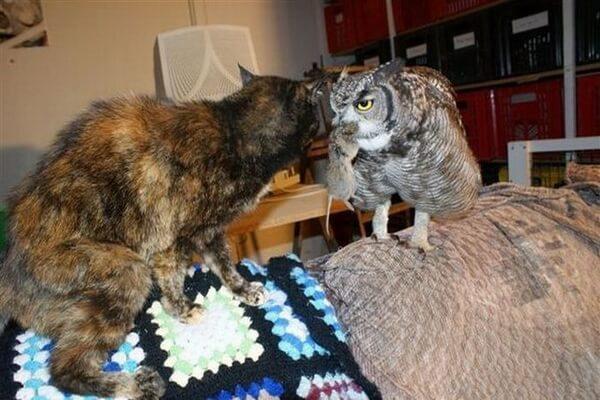 Как и чем кормить сову - особенности питания птицы в домашних условиях