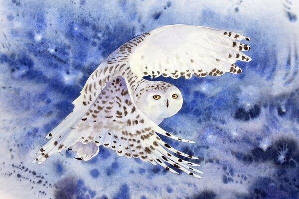 Что символизирует белая сова