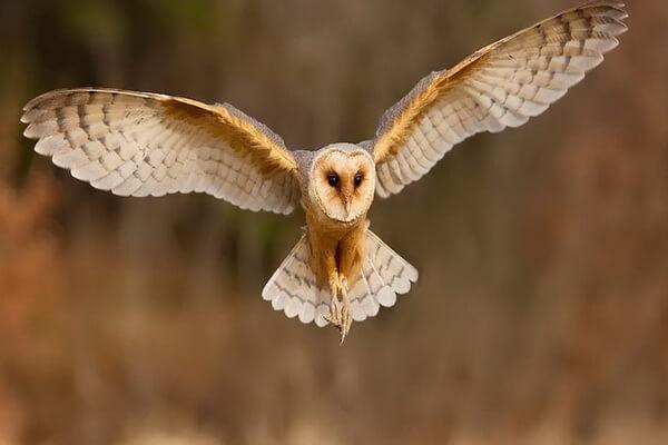 К чему снится нападающая сова - основные значения сна