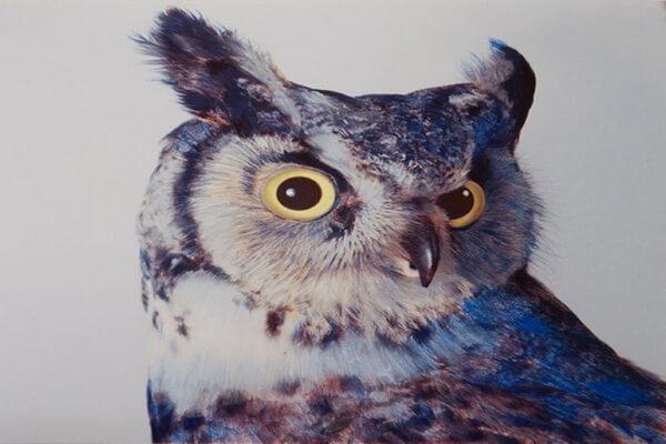 Совы в живописи John Pusateri