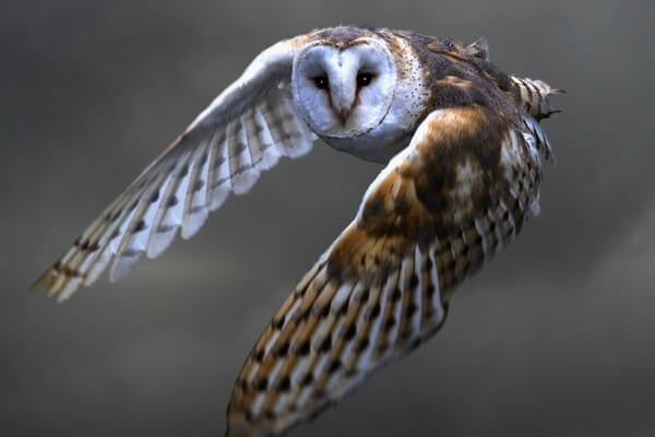 В чём разница между совой и филином - основные черты